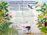 <h5>Cwmllwyd Nature Reserve</h5><p>Leaflet</p>