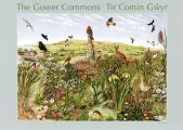 <h5>Gower Commons</h5><p>Wildlife Poster</p>