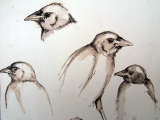 <h5>Young Jackdaw</h5><p>Ink and Wash</p>